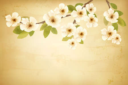 Vintage background with blossoming tree brunch and white flowers. Vector.  Illustration
