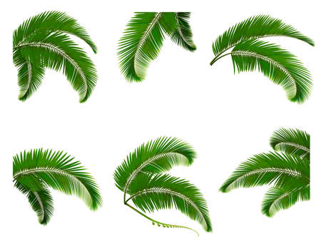 frond: Set green branches with leaves of palm trees  Vector   Illustration