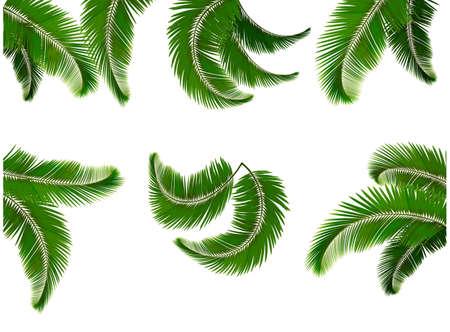 Stel groene takken met bladeren van palmbomen Vector