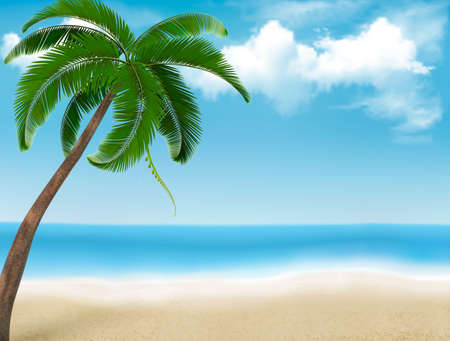 palm tree isolated: Palm tree holiday background. Vector.