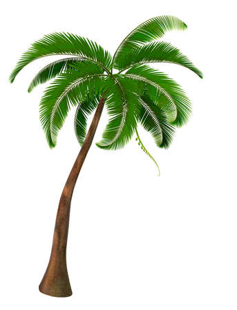 tree isolated: Palmera. Vector.
