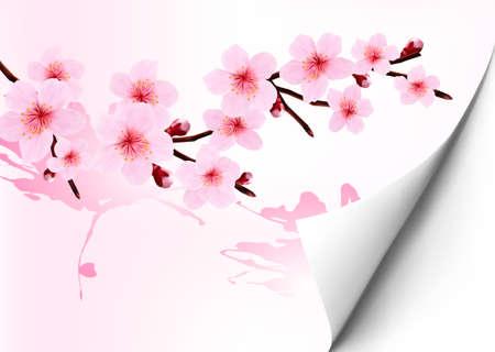 꽃이 만발한: 꽃이 만발한 벚꽃 분기 봄 배경입니다. 벡터 일러스트 레이 션.