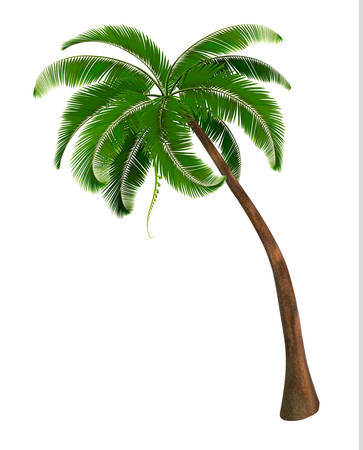 fruit stalk: Background with a palm tree. Vector illustration