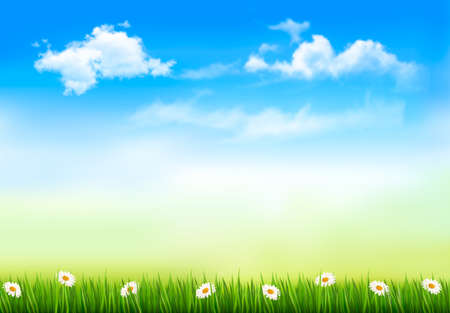summer nature: Summer nature background with green grass and sky   Vector   Illustration