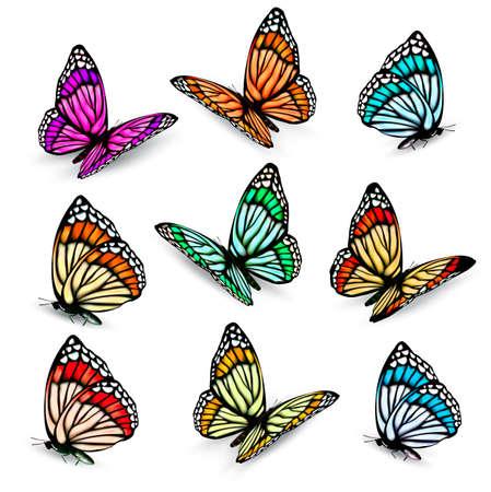 mariposas amarillas: Conjunto de coloridas mariposas vector realista.