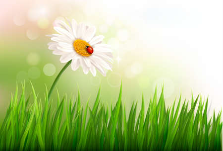 Spring background with a daisy and a ladybug. Vector. Vector