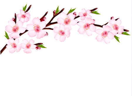 Spring background of a blossoming tree branch with spring flowers  Vector