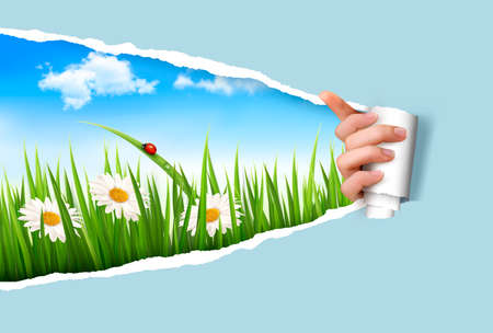 Spring background with flowers, grass and a ladybug  Vector   Vector