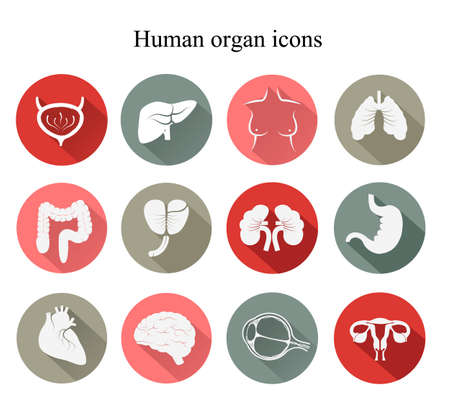 bowel: Set of human organs flat icons. Vector. Illustration