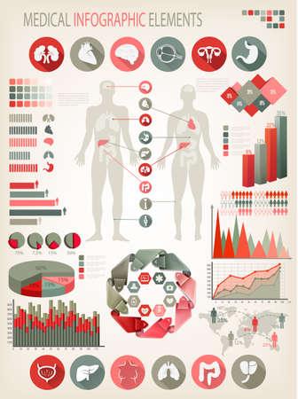 higado humano: Infografía médica elementos. Cuerpo humano con los órganos internos. Vector.