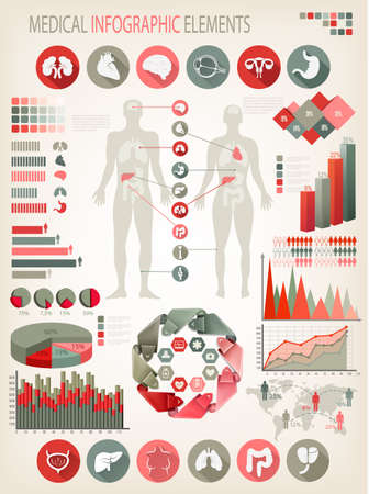 bowel: Medical infographics elements. Human body with internal organs. Vector.  Illustration