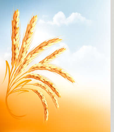 wheat bread: Ears of wheat in front of blue sky  Vector illustration  Illustration