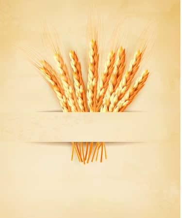 thresh: Ears of wheat on old paper background. Vector illustration