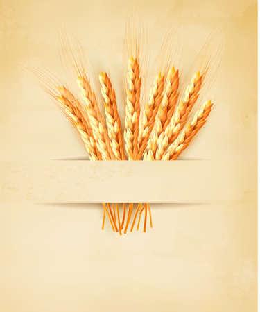 thresh: Espigas de trigo sobre fondo de papel viejo. Ilustraci�n vectorial Vectores