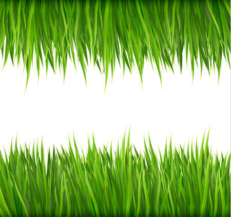 high angle view: Nature background with green grass. Vector.