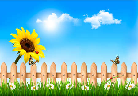 Summer nature background with sunflower and wooden fence   Vector Vector