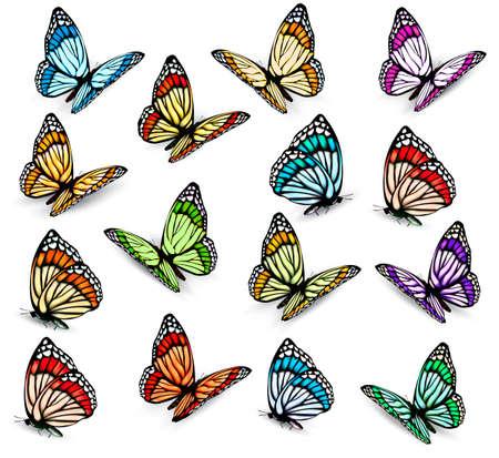 Ensemble de papillons colorés réalistes. Vecteur Banque d'images - 29491668