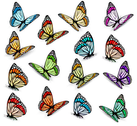 colorful butterfly: Set of realistic colorful butterflies. Vector