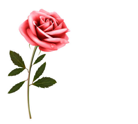 macro leaf: Flower background with a pink rose. Vector.