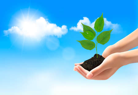 shielding: Hands holding a young plant. Vector.