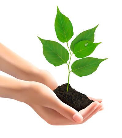 Human hands holding green tree with leaves. Vector