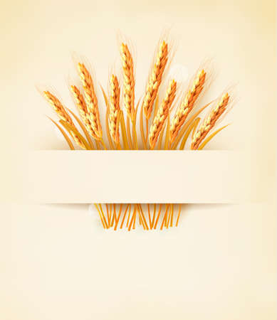 Ears of wheat on old paper background.  Illustration