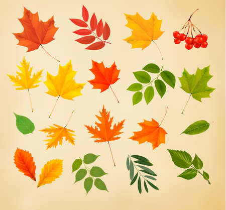 Set of colorful autumn leaves. Vector illustration.  Vector