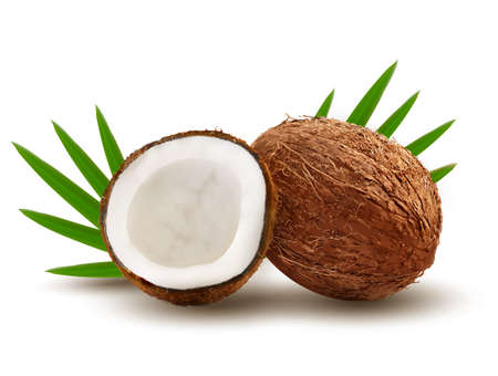 Coconut with leaves. Vector.  Vector
