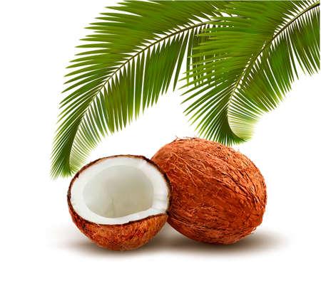 Noix de coco avec des feuilles de palmier. Vector. Vecteurs