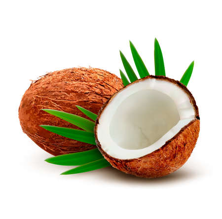Coconut with leaves. Vector.  Çizim