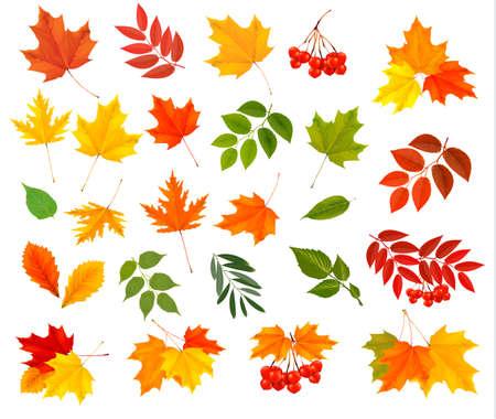 Conjunto de coloridas hojas de otoño. Ilustración vectorial Ilustración de vector
