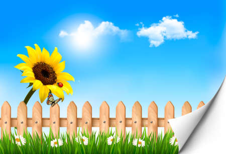 Summer nature background with sunflower and wooden fence . Vector