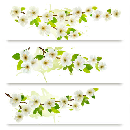 blossoming: Three spring banners with blossoming tree brunch with spring flowers. Vector illustration