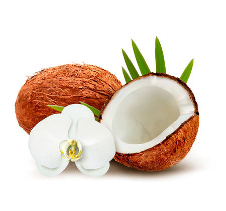 Coconut with leaves and white flower. Vector. Vector
