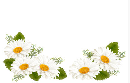 Nature background with white beautiful flowers. Vector illustration Çizim