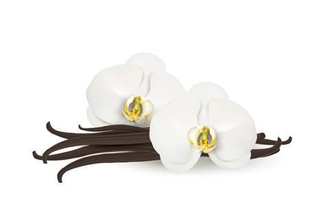 white orchids: Vanilla background. Vector. Illustration