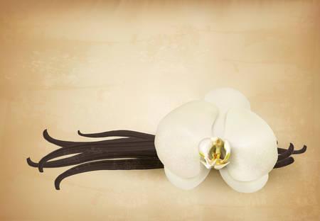 indian bean: Vanilla retro background. Vector. Illustration