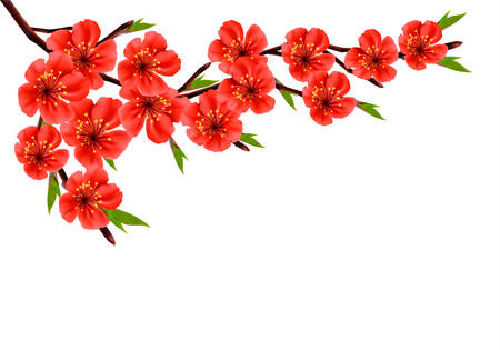 Spring background with blossom branch of red flowers. Vector Illustration
