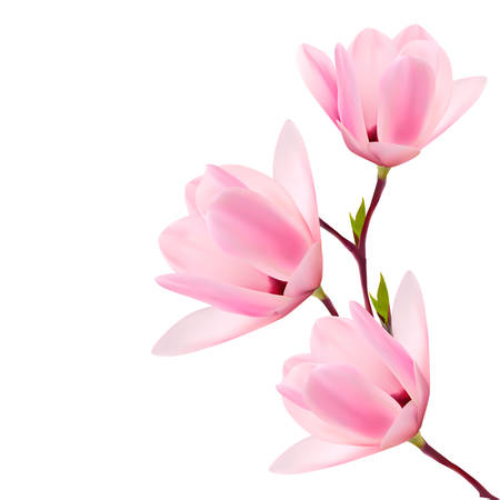 Spring background with blossom branch of pink flowers. Vector