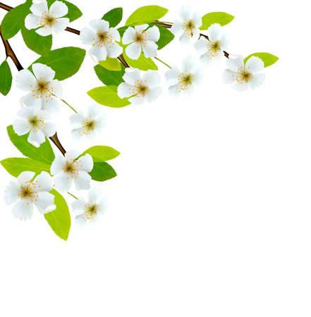 꽃이 만발한: 봄 꽃과 함께 나뭇 가지 꽃이 만발한. 벡터 일러스트 레이 션.