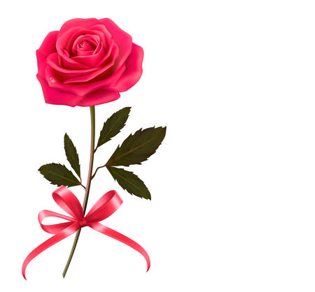 rose garden: Background with rose and a bow. Vector.