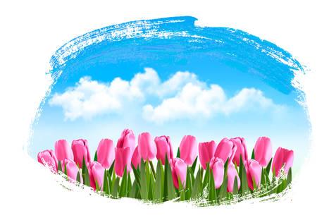 dream car: Fondo de primavera con tulipanes de color rosa. Vector.