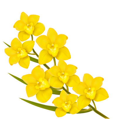 yellow vector: Holiday yellow flowers background. Vector.