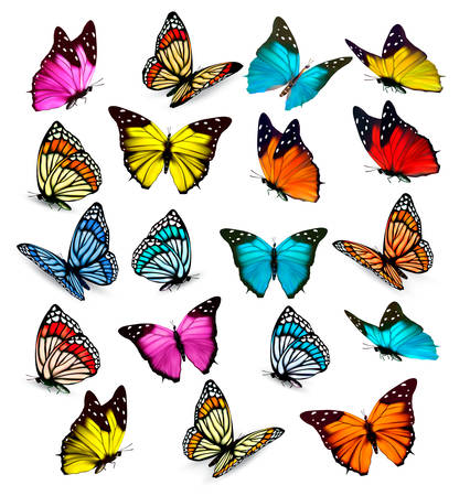 Big collection of colorful butterflies. Vector Çizim