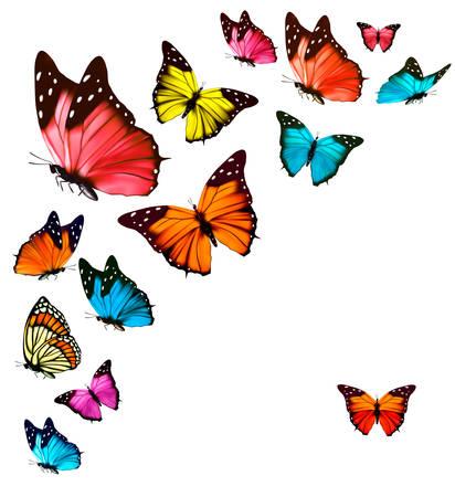 mariposa azul: Fondo con las mariposas de colores. Vector.