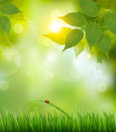 green banner: Nature background with green spring leaves . Vector illustration Illustration