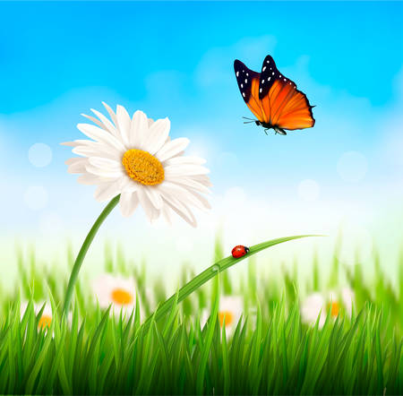 yellow sky: Nature spring daisy flower with butterfly. Vector illustration.