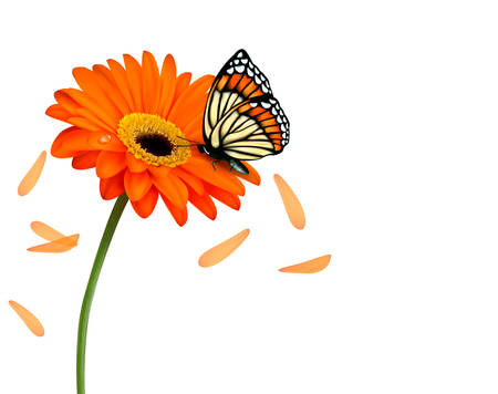 gerber daisy: Background with beautiful red flower with butterfly.