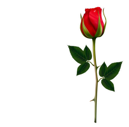 green and red: Flower background with a beautiful red rose. Vector.