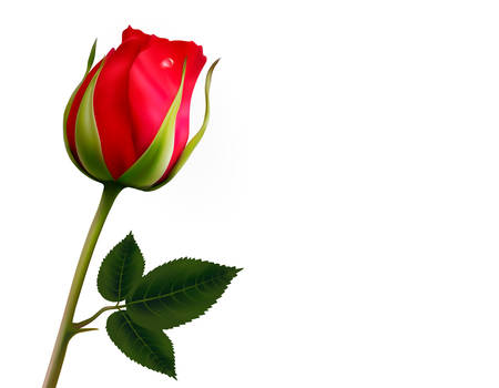 Flor de fondo con una hermosa rosa roja con hojas verdes. Vector Foto de archivo - 38330530